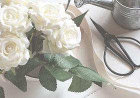 小清新白色玫瑰花背景高清图