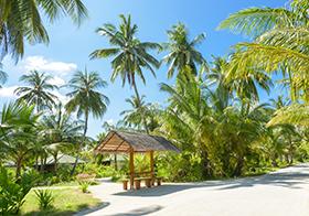 热带海岛的椰子树高清图