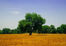 草原上的一棵树封面高清图