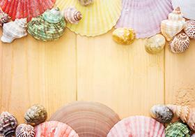 海螺贝壳清新背景高清图