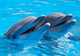 海豚的微信高清圖