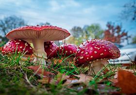 野生彩色蘑菇高清图