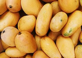 金燦燦的新鮮芒果高清圖
