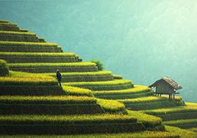 农村绿色梯田封面高清图