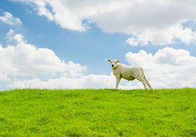 蓝天白云绿草绵阳封面高清图