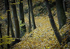 秋天落葉滿地高清圖