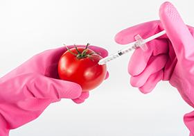 西紅柿實驗高清圖