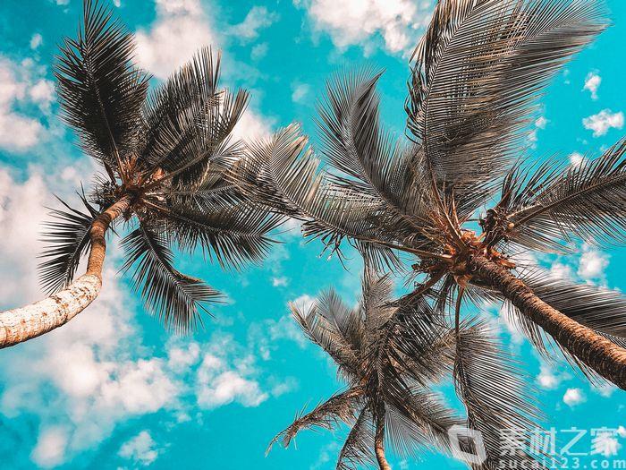 蓝天白云椰子树背景高清图