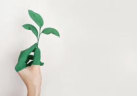 手握綠葉創意高清圖