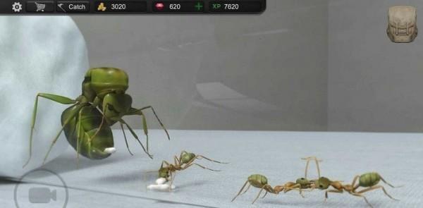蚂蚁模拟器3d中文版下载