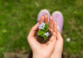 手心里的绿植幼苗高清图