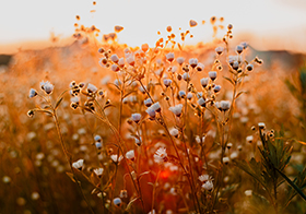 黄昏时刻的小花高清图
