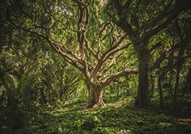 森林里的百年老树高清图